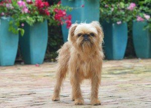This photo is of a dog. Dog Boarding in Royal Palm Beach FL